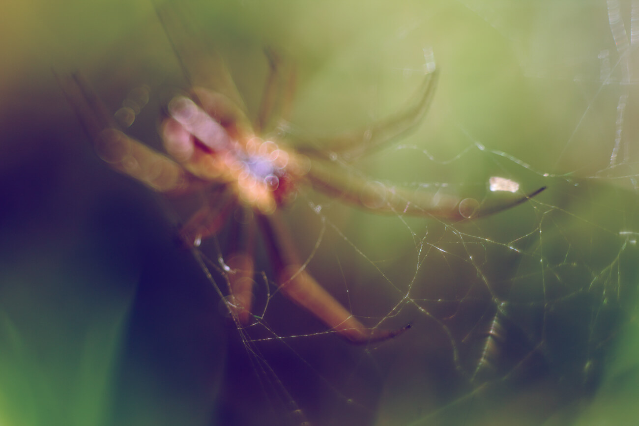 picture spider